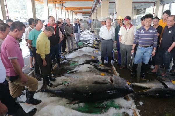 南方澳近日已陸續拍賣出3條黑鮪魚。(照片由讀者李忠衛提供)