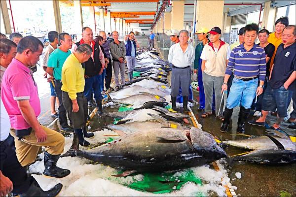 南方澳近日已陸續拍賣三條黑鮪魚。(照片由讀者李忠衛提供)