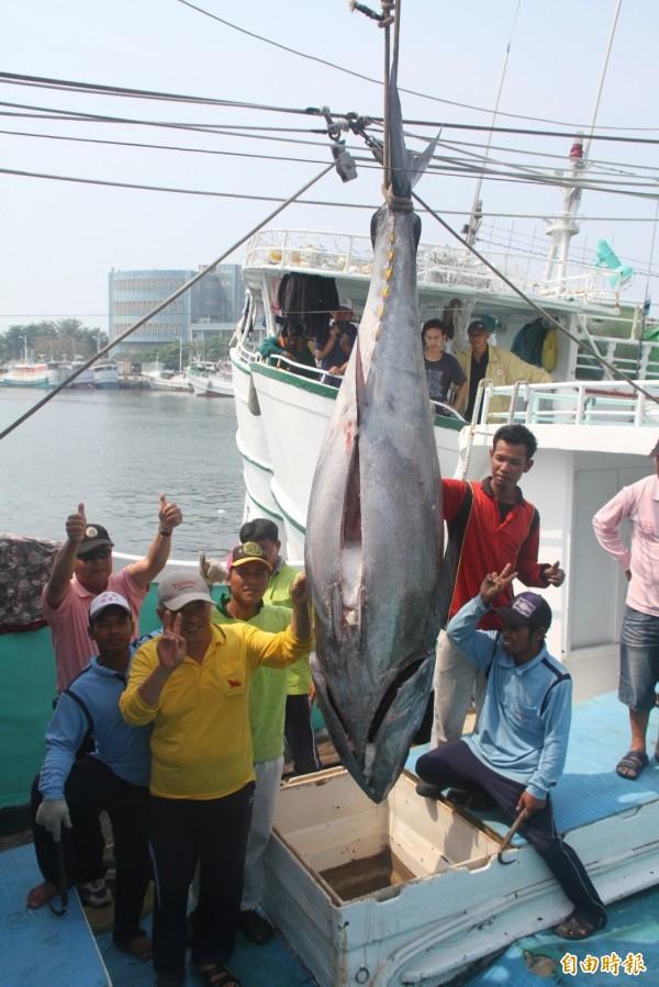 「第一鮪」驗魚後,漁工、船長都露出歡欣神情。(記者陳彥廷攝)