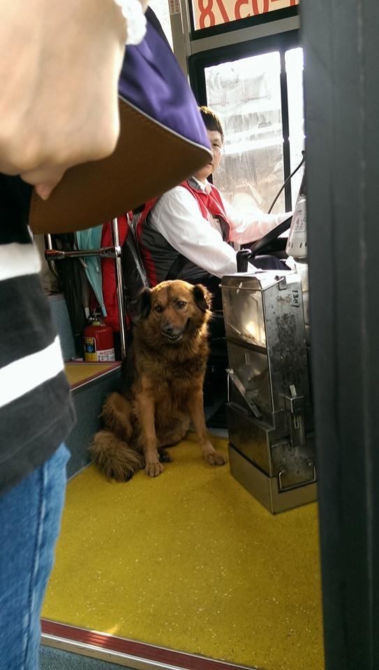 司機不忍心把狗趕下車,網友大讚很暖心,幸好大狗阿肥現在順利回家了。(圖擷取自陳程振臉書)