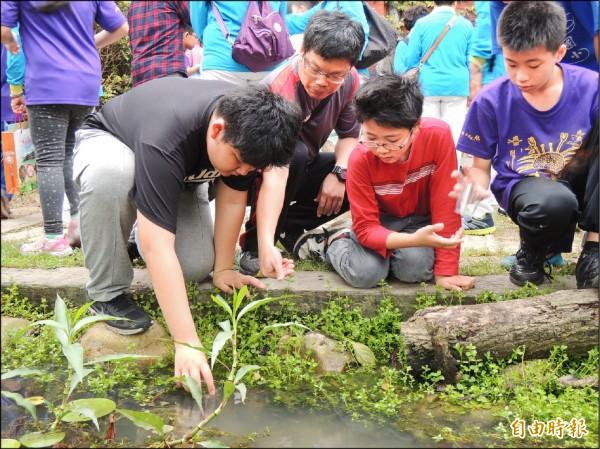 米倉國小學生們放養原生青鱂魚。(記者葉冠妤攝)