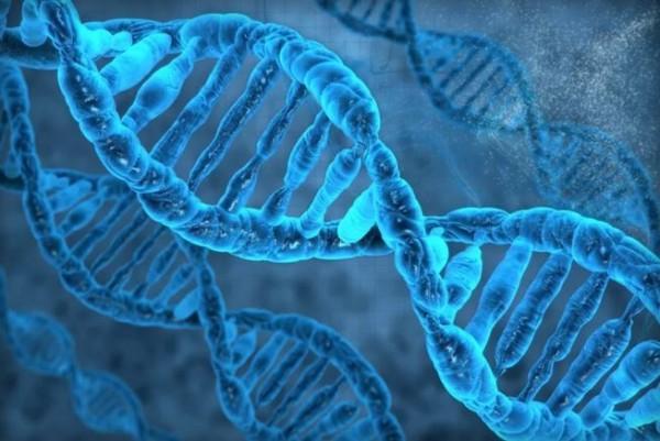 跨國的科學家們進行生物科學研究發現,基因會影響並決定人類「破處」的年紀。(圖擷取自The Verge)