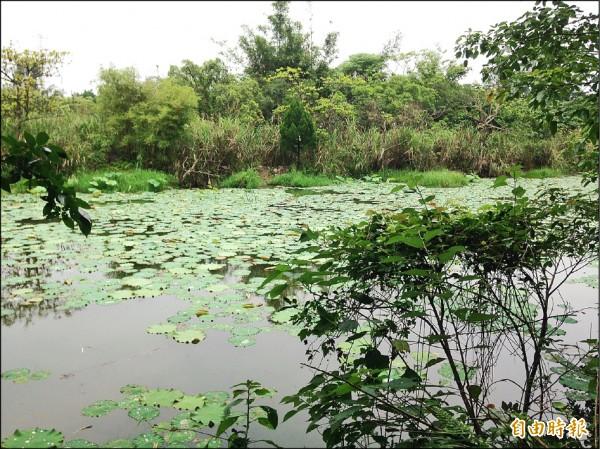 市府計畫在大漢溪畔設置18公頃的「山豬湖自然生態公園」,計畫費用粗估2200萬元。(記者李容萍攝)