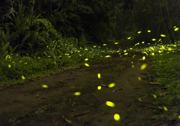 新竹縣溪南山區出現螢火蟲潮,吸引攝影愛好者蜂擁而至,輕鬆就可以拍到畫面裡有點點螢光的好照片。(圖由攝影愛好者羅浚濱提供)