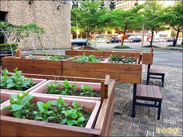 田園城市所種植的蔬果檢驗項目僅限農藥,可能含有的重金屬並未納入,圖為議會廣場田園城市示範區。(記者梁珮綺攝)