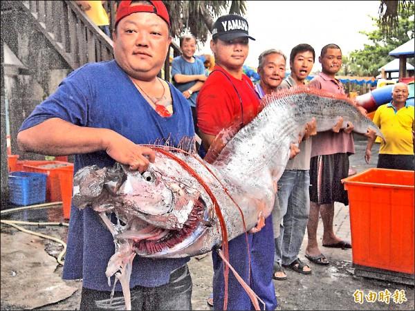 5名大男人合力抬搬身長約4.7公尺、重達44公斤的地震魚,個個氣喘吁吁。(記者陳賢義攝)