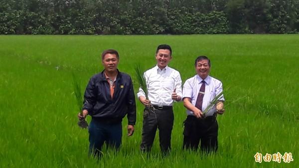 新竹市也產香米了!由稻米產銷班推出的益全香米,今年試種一公頃,八月問世,產量才3000公斤,主打無毒稻米,已開始預購了,連市長林智堅都忍不住聞香米,還到稻田中巡水路摸稻子。(記者洪美秀攝)