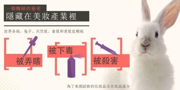 全球每年約有12萬隻動物,為了人類的化粧品實驗而白白犧牲。(圖擷取自台灣防止動物虐待協會官網)