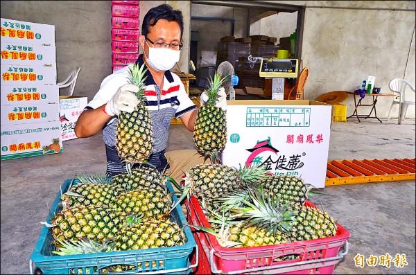 入選國宴食材的關廟鳳梨,以農會的「金佳蒂」品牌供貨。(記者吳俊鋒攝)