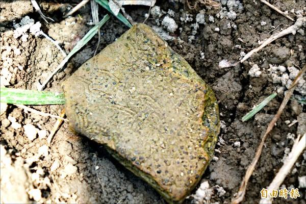 菜園角遺址可以發現先民所留的陶片。(記者劉曉欣攝)