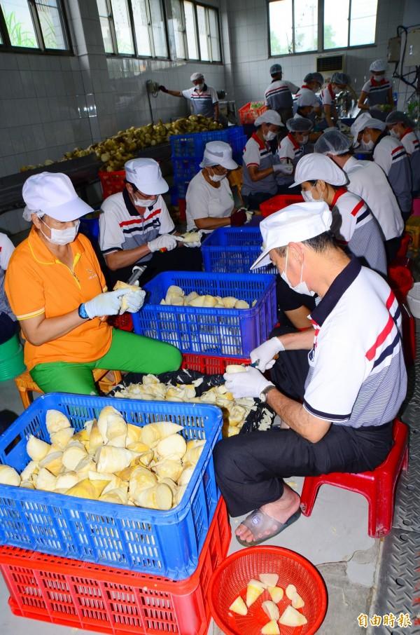 農會人員分工合作處理鮮筍,現場忙碌不已。(記者吳俊鋒攝)