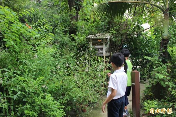 彰化市中山國小行動生態館,蝴蝶成群飛舞,是小朋友學習跟自然和平共存的樂園。(記者張聰秋攝)