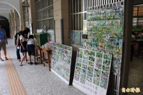 教室走廊外陳列各式植物圖鑑,還有動物棲息的觀察箱。(記者張聰秋攝)