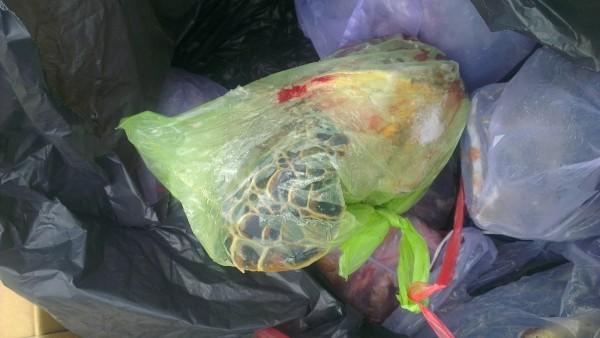 有網友認為部分龜殼看起來很像綠蠵龜。(圖截取自PTT)
