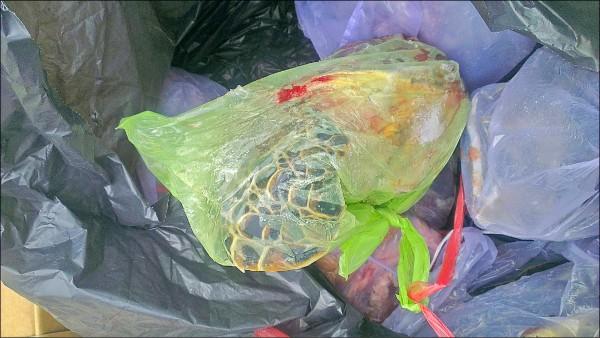 遊客發現的塑膠袋內,露出疑是綠蠵龜四肢。(取自PTT)