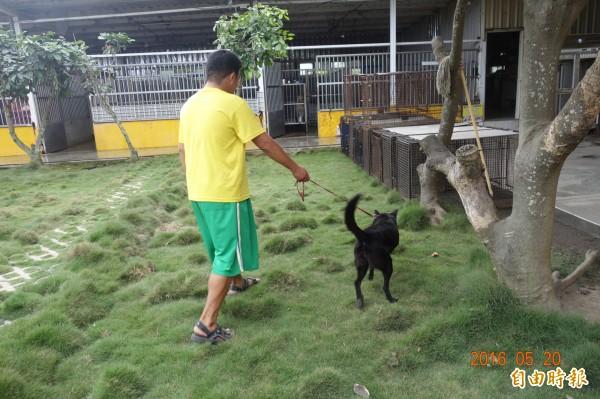 將流浪犬變為校犬,成為澎湖解決流浪動物問題選項之一。(記者劉禹慶攝)