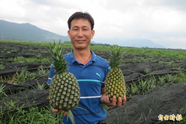 何秉洋以1分地試種了5百顆西瓜鳳梨,以同樣的種植方式,西瓜鳳梨換肉率比金鑽高出3倍。(記者邱芷柔攝)
