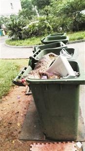 中國有社區垃圾桶出現死鱷魚,讓民眾都嚇了一大跳。(圖擷取自楚天都市報)
