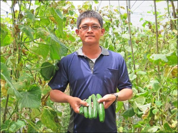 屏東里港青年農民吳志賢返鄉種小黃瓜。(屏東縣農業處提供)