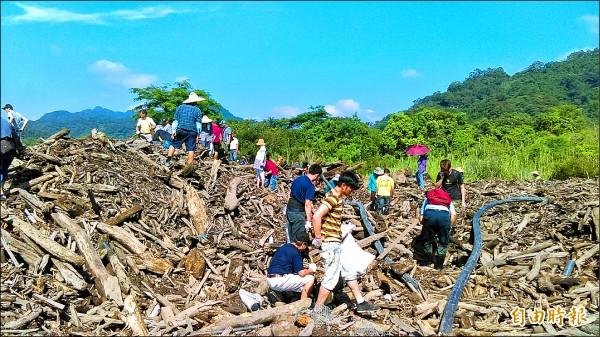石門水庫漂流木,7月1日前全面開放撿拾。(記者李容萍攝)