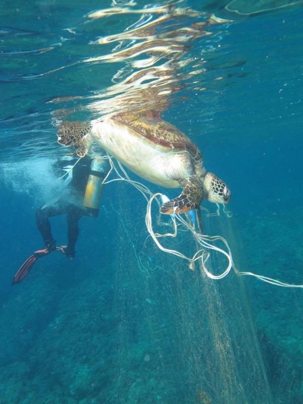 墾丁海龜屢遭網死。(資料照,記者蔡宗憲翻攝)