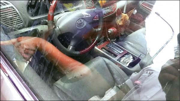 台北市動保處6月29日接獲通報,有飼主將2隻狗狗遺留在悶熱的車內,其中一隻不幸送醫不治。(台北市動保處提供)