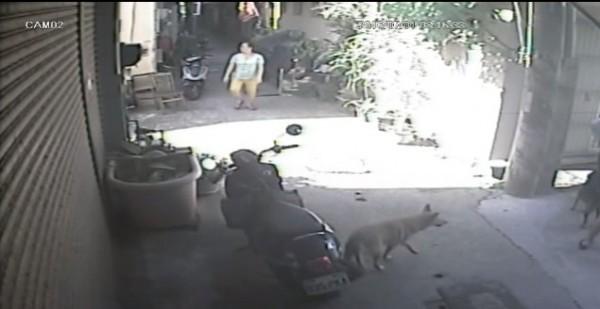 居民和狗都嚇到跑出來。(民眾提供)