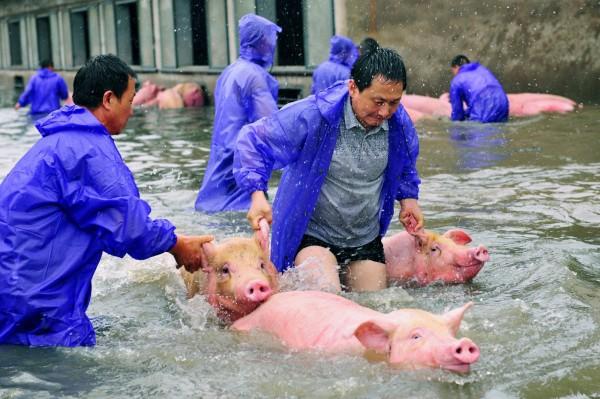 中國豪雨釀災影響2400萬人安徽傳農場鱷魚趁機外逃- 國際- 自由時報電子報