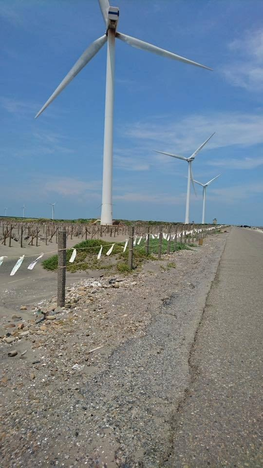 彰化縣野鳥學號召志工在海埔新生地沙灘區域的柱子,捆綁1100公尺長的絲帶,避免遊客闖進新生地破壞小燕鷗繁殖。(圖為彰化縣野鳥學會提供)