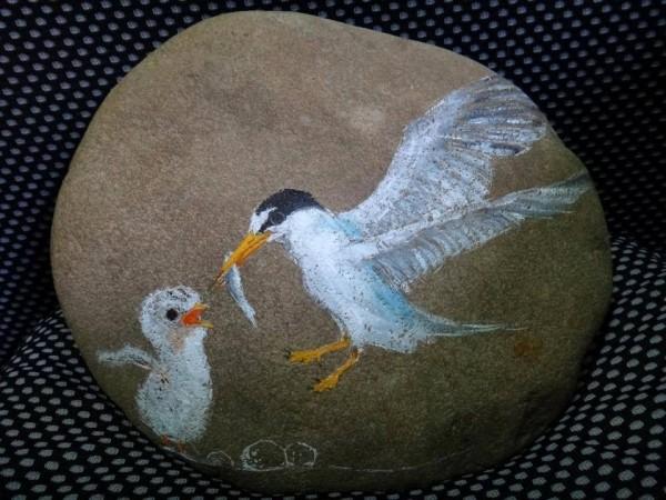 沙灘石塊畫上小燕鷗媽媽和寶寶的溫馨圖案。(圖為彰化縣野鳥學會提供)