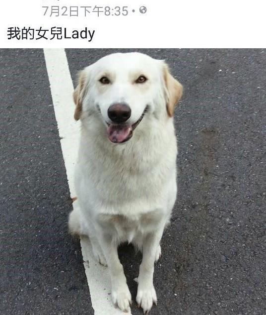 林男將自己所飼養的白狗丟棄於南投仁愛山區。(記者陳鈺馥翻攝)