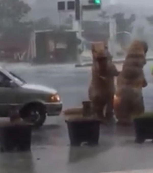 強颱尼伯特肆虐高雄,不僅帶來豪大雨更進入淹水警戒,不過這時卻有網友直擊兩位民眾穿著恐龍裝,跑到高雄美術館前面的路口遊玩。(圖擷自爆料公社)