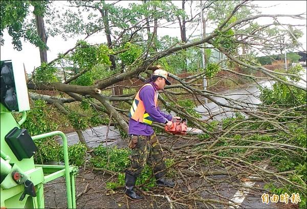 颱風過後,南市環保局動員近六百名清潔人力,及車輛機具清理,迅速恢復市容。(記者蔡文居攝)