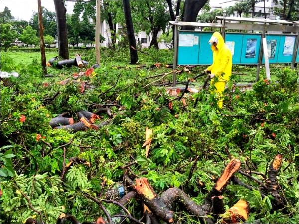 屏東大學連日來努力清理風災後校園。(屏東大學總務長陳永森提供)