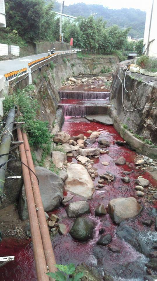 觀音坑溪乍看之下像是血流成河。(圖擷自爆料公社)