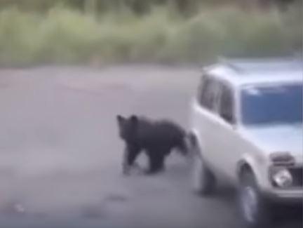一隻黑熊閒晃到一輛休旅車旁。(圖擷取自YouTube)