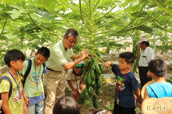林內農會總幹事黃國洲說明持續高溫,已對木瓜生產發生影響。(記者詹士弘攝)