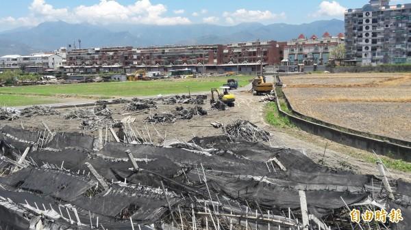 台東受災荖葉園如接受輔導轉作,可獲每公頃12萬元補助。(記者黃明堂攝)