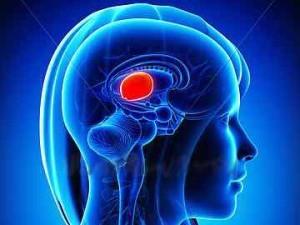 中腦位在於大腦裡面,主要是控制聽力以及視力,然而近期新加坡研究單位聲稱已製造出人造中腦,未來可以幫助醫療界。(圖擷取自Mid Brain Power)