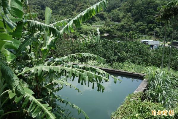 新北八里荖芊里山坡地坐落了十多座蓄水池,是20年前省政府時期幫農民所蓋,作為灌溉農地用。(記者葉冠妤攝)