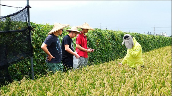 興大學生組「吾堅稻」團隊提供客製化的土壤診斷服務,助農民降成本提升產量。(圖:興大提供)