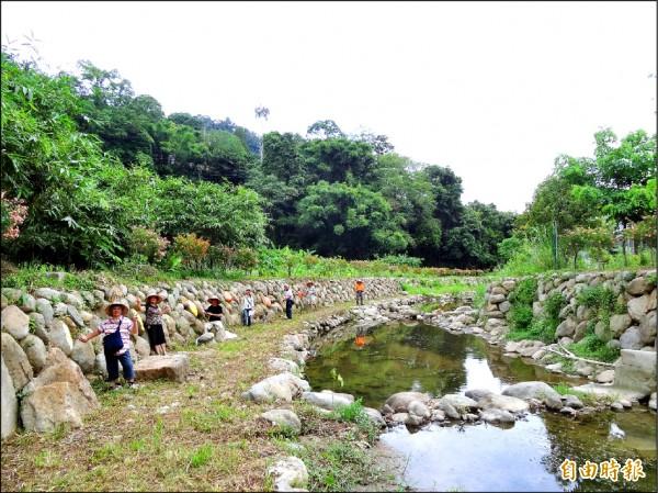 擁有生態蝴蝶村美名的北埔鄉南外社區再接再厲,準備打造「蝴蝶橋」,居民昨天在小南坑親水步道彩繪蝴蝶卵。(記者廖雪茹攝)