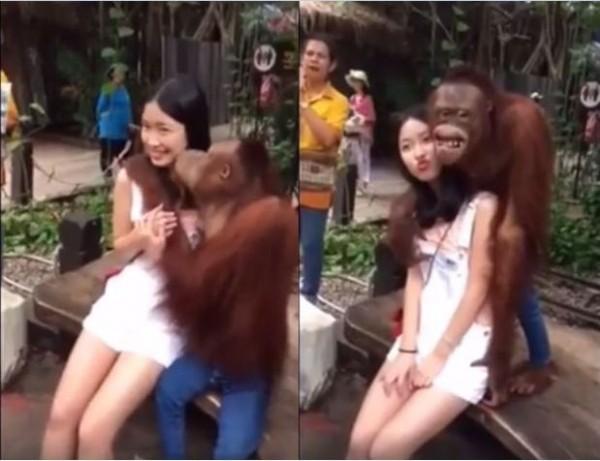 網路上最近流傳一段正妹遭猩猩調戲的影片。(圖擷取自「shanghaiist」臉書粉絲團)