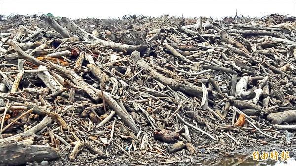 尼伯特颱風在台東造成大量風倒木,堆積在捷地爾。(記者黃明堂攝)