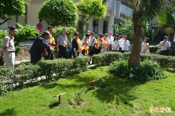 象徵日本西伊豆町與澎湖情誼的山茶花樹,為日本參訪團必參觀之處。(記者劉禹慶攝)