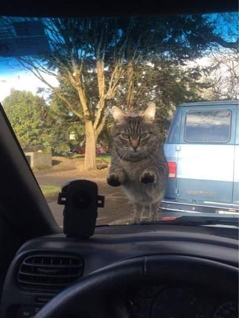 貓奴出門上班前忘記餵食,家中的喵主子震怒攔車。(圖擷自Resieh Reddit)