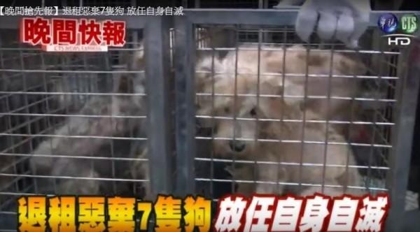 高雄市一處民宅有7隻狗疑似遭到棄養,因沒人打理造成整間公寓凌亂散發惡臭,在與動保處和里長、屋主等人的協助下,已讓這7隻狗送醫。(圖擷取自華視新聞)