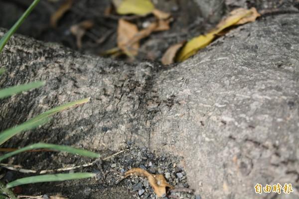 南投縣內各地靠山區的鄉鎮近來深受小飛蟻危害,夜裡趨光的小飛蟻不斷飛入住家,影響民眾生活品質。(記者劉濱銓攝)