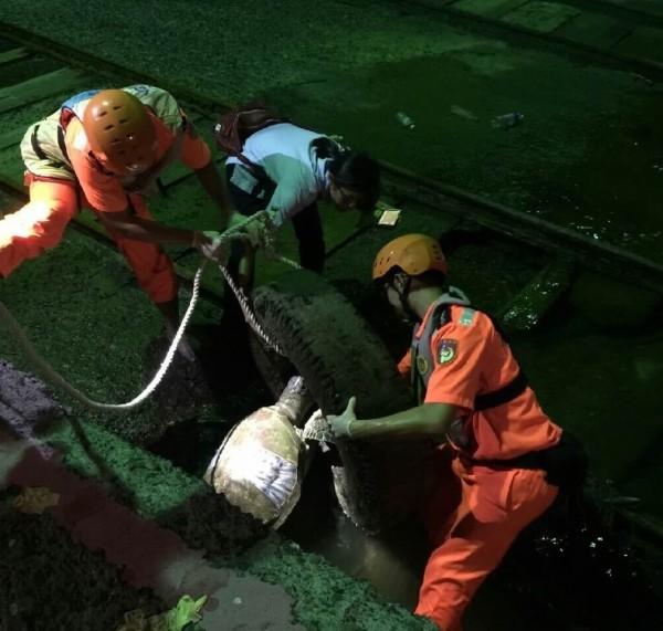 海巡人員發現綠蠵龜已死亡多日,將綠蠵龜拉出卡著的廢輪胎(記者葉永騫翻攝)