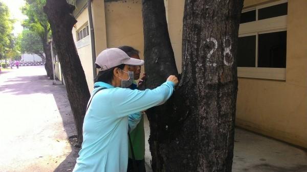 防疫人員在樹洞查獲斑蚊孑孓。(記者洪定宏翻攝)